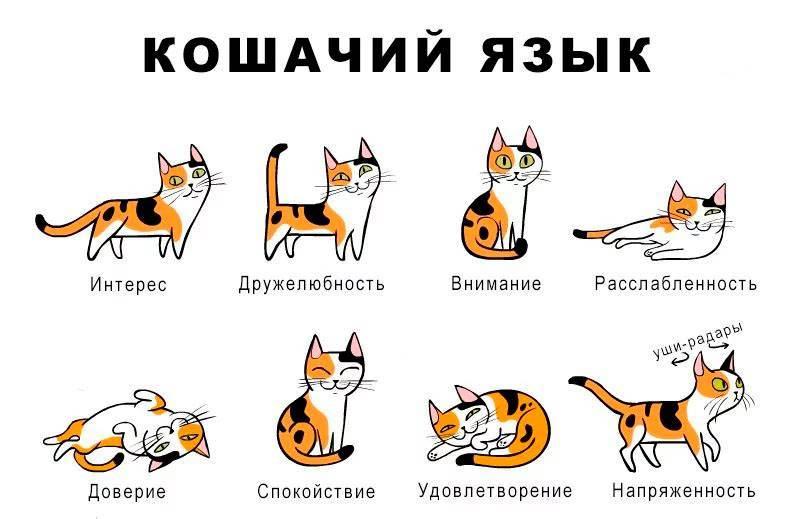 Почему кот издает странные звуки