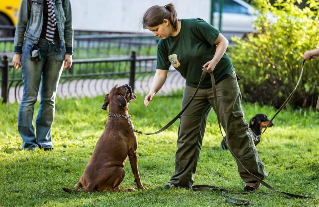 С каких команд начинать обучение щенка? правильно обучаем щенка первым командам.
