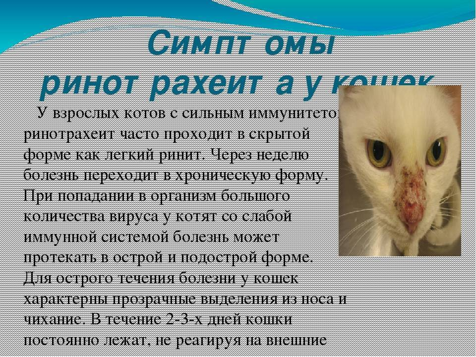 Инфекционные болезни кошек