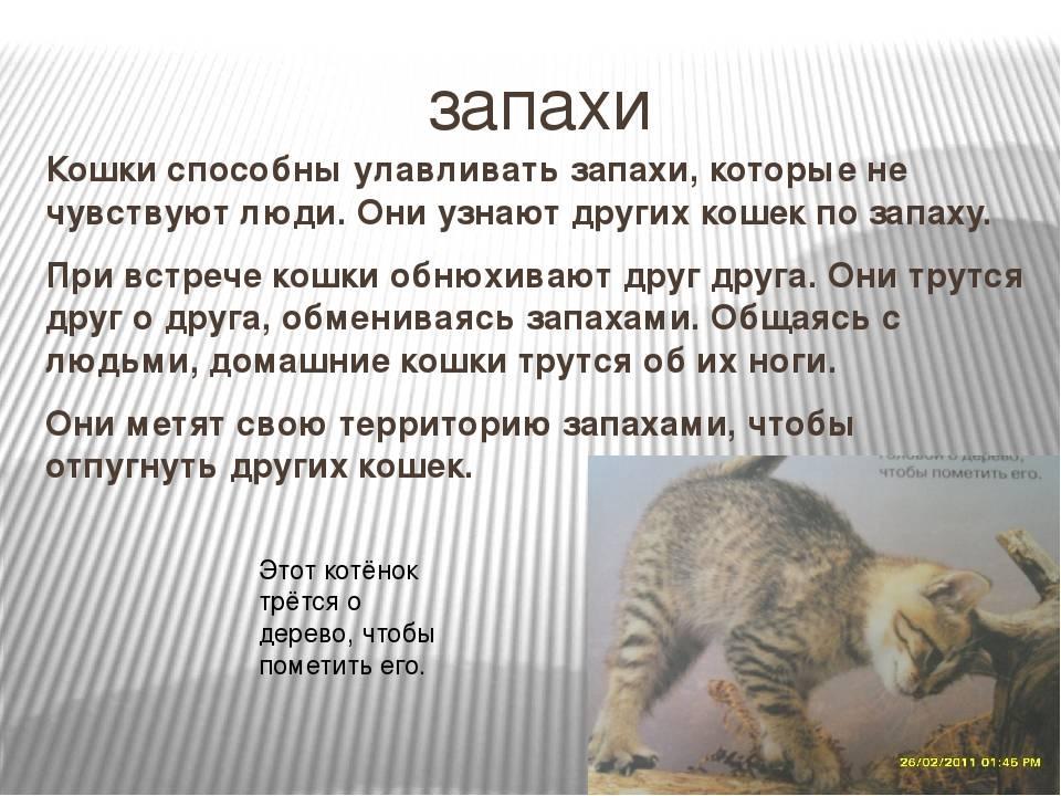 Запах изо рта у кошки: почему из пасти питомца неприятно пахнет и как от этого избавиться?