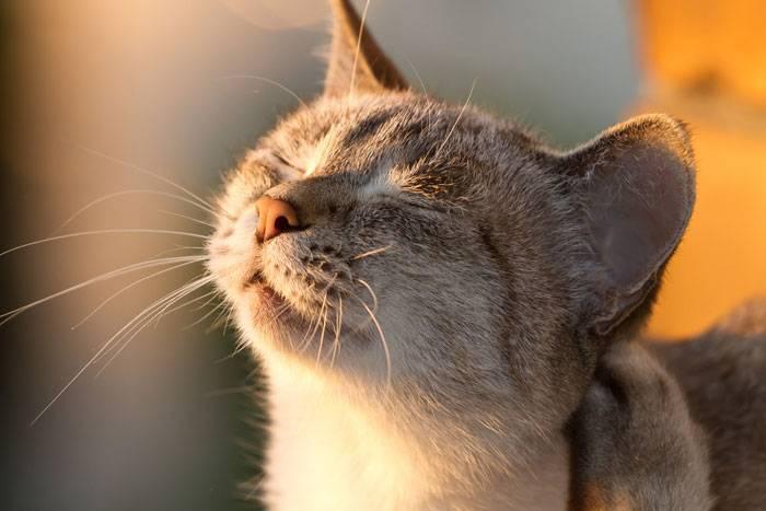 Можно ли найти свое счастье: приметы о подобранных кошках