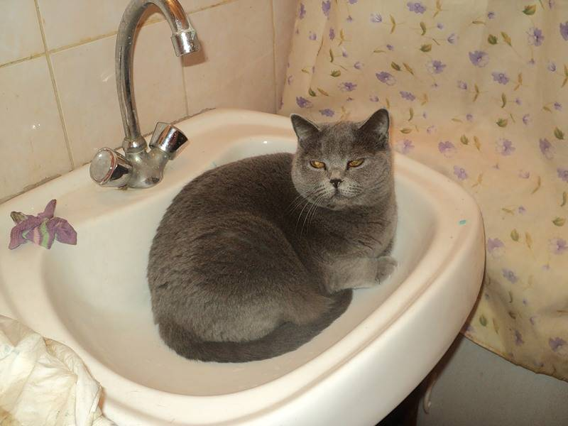 Как купать котенка: основные правила, с какого возраста и как часто можно мыть питомца