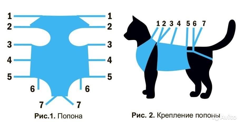 Попона для кошки: советы по выбору и самодельное изготовление