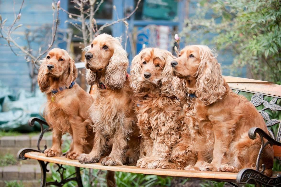 Топ 10 самых умных собак в мире | | на всякий случай