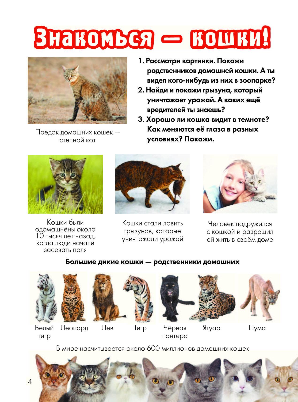 Семейство кошачьи, представители, классификация кошачьих, признаки кошек, строение, инстинкты, органы чувств кошачьих
