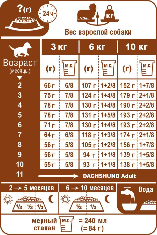Чем кормить таксу в домашних условиях: как выбрать сухой корм роял канин для правильного питания щенка и взрослой собаки