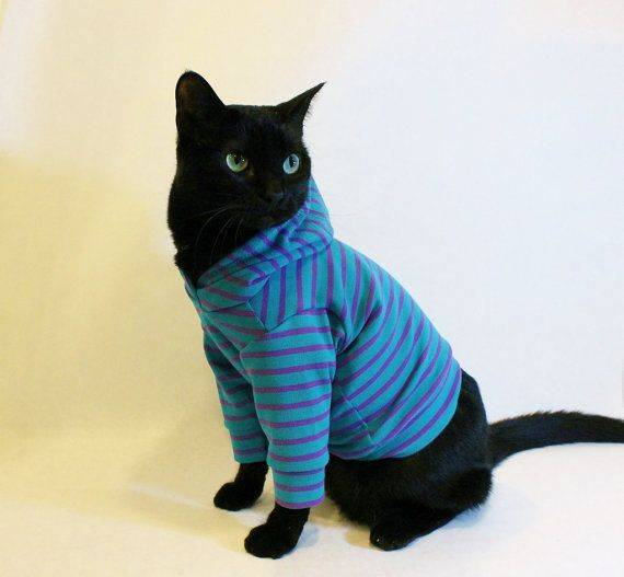 Одежда для кошек: теплая вязаная одежда для котов и котят. как выбрать правильный размер? как приучить к одежде?
