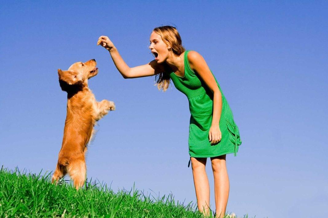 Как научить собаку приносить палку или игрушку