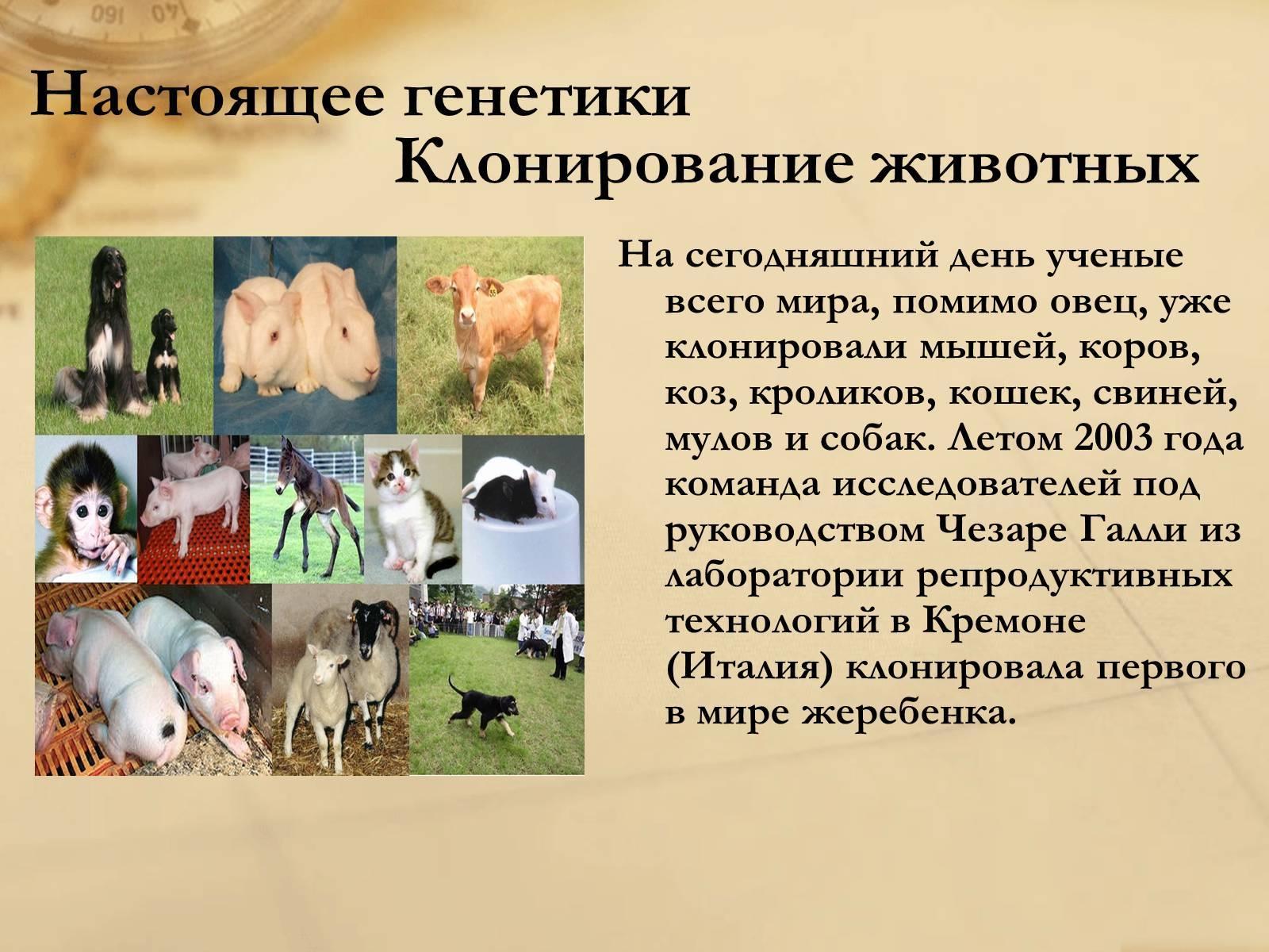 Клонирование животных и растений - вики