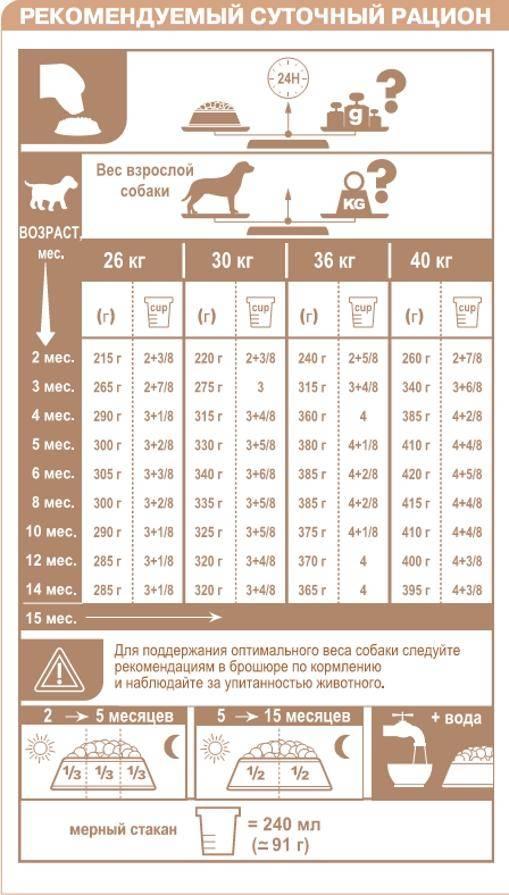 Размеры немецкой овчарки: стандарты, отклонения