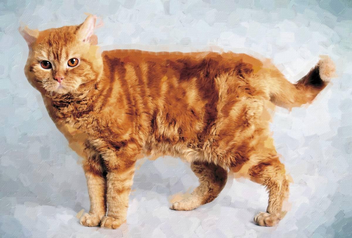 Кошка окраса черепаховый мраморный