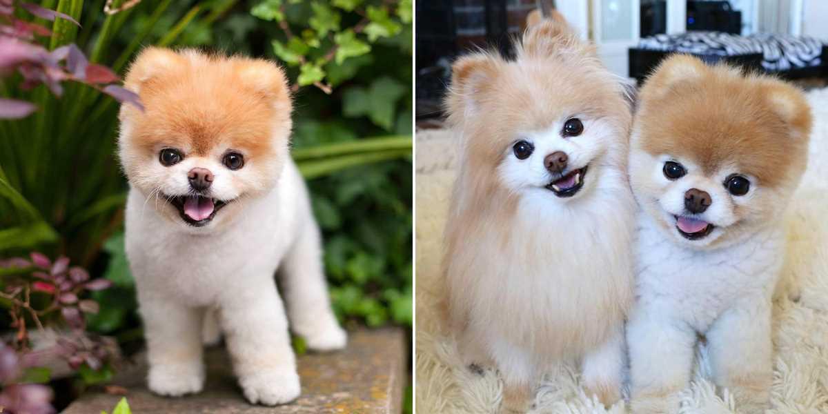 Милость зашкаливает — самые обаятельные породы собак в мире