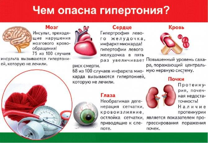 Стоматит у кошек – описание, симптомы, лечение, профилактика