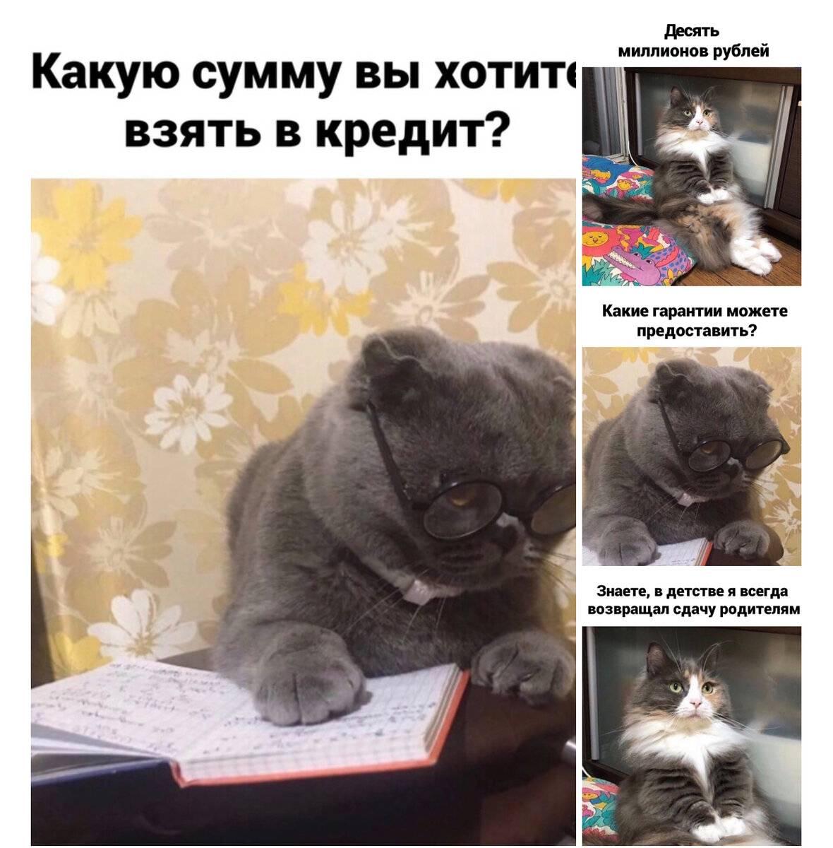 Почему кот плачет – причины и что делать