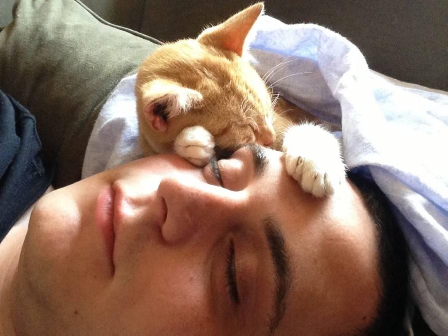 Почему коты и кошки спят на своих хозяевах: мистическое и научное объяснение