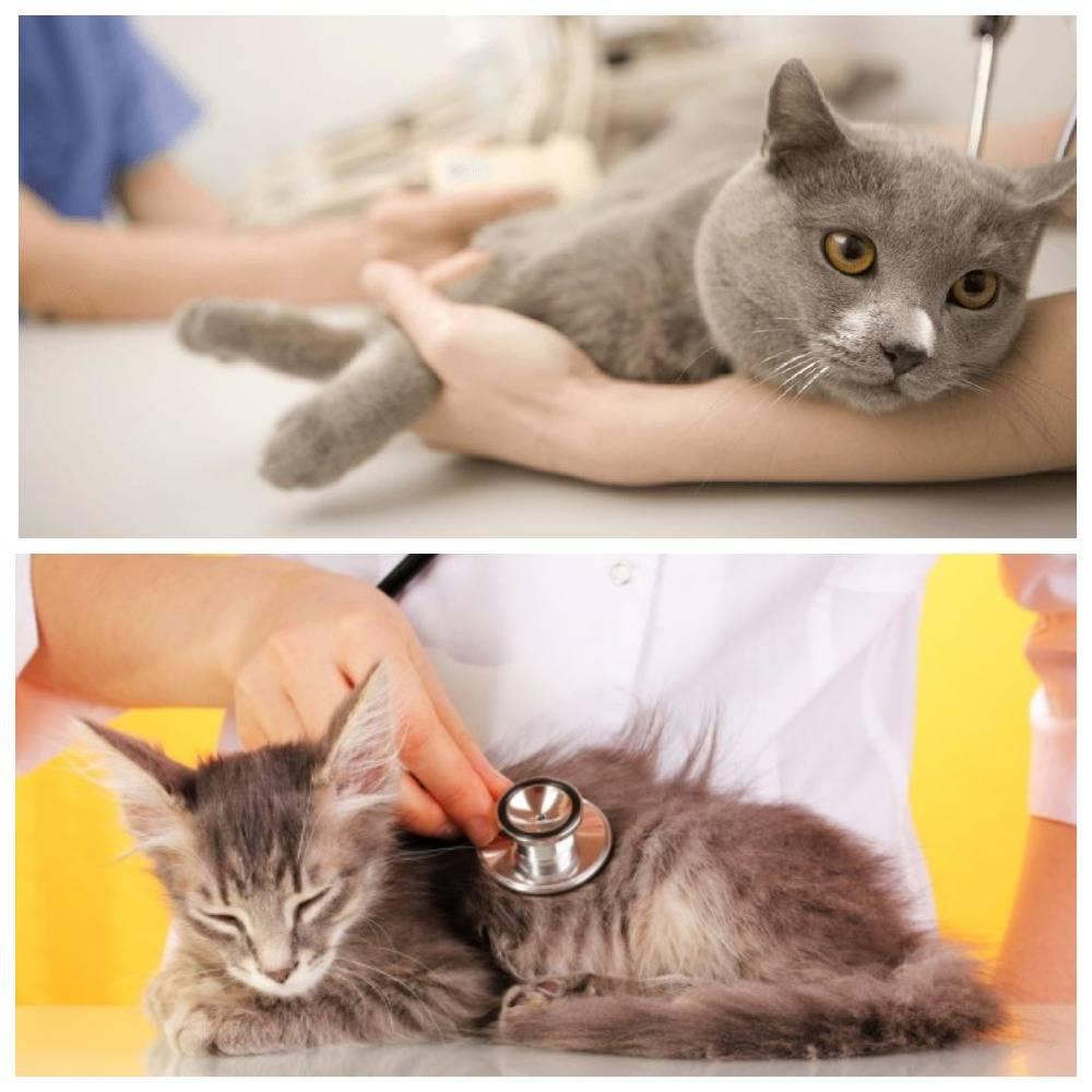 Сахарный диабет у кошек: 9 главных симптомов