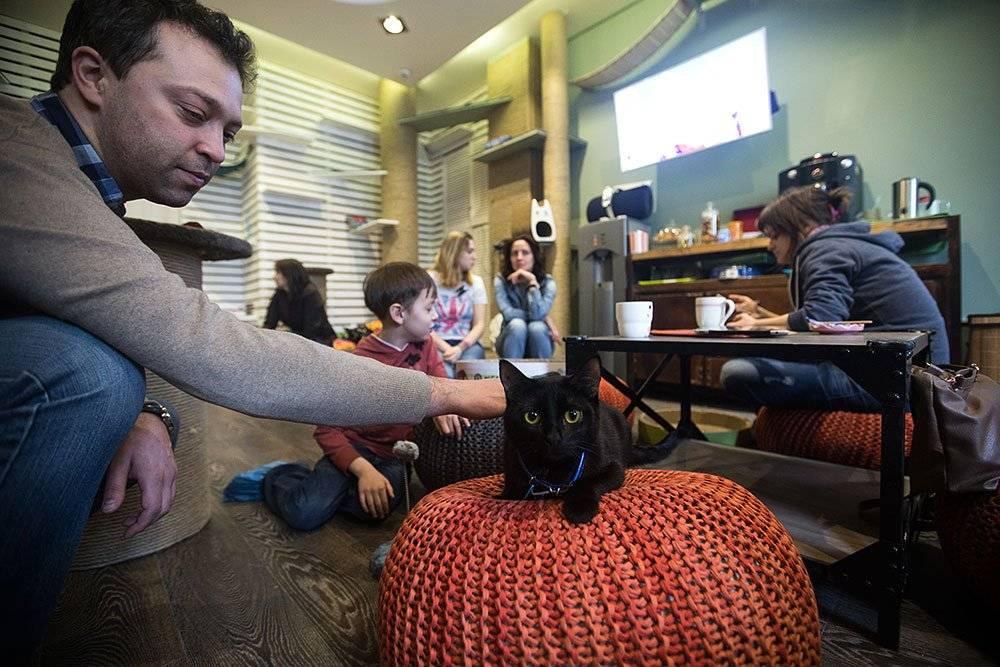 Кафе с кошками в санкт-петербурге – где можно попить кофе и потискать котика