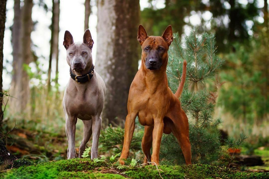 Самые редкие породы собак в мире | fresher - лучшее из рунета за день