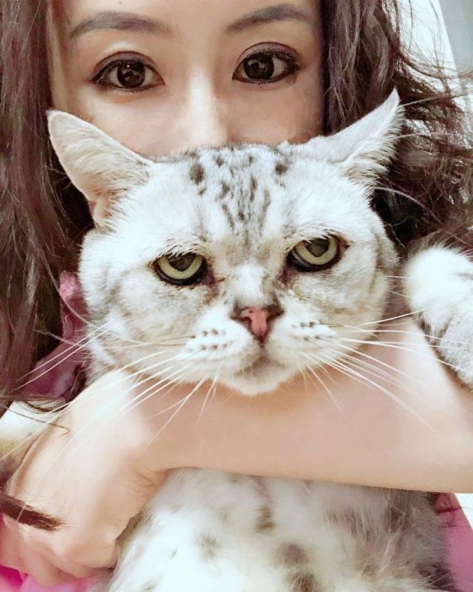 Модные и современные клички для кошек и котов - изящные имена для котят мальчиков и девочек