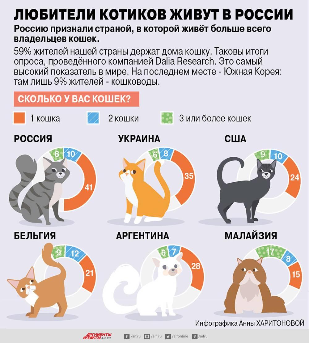 Породы кошек, имеющих «собачий» характер