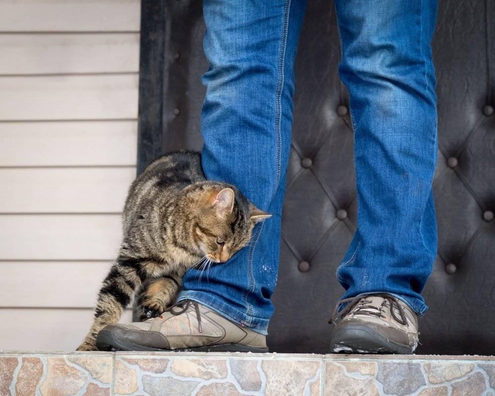 Сорваться с цепи на ближнего: почему домашние питомцы нападают на хозяев? | общество | аиф владивосток