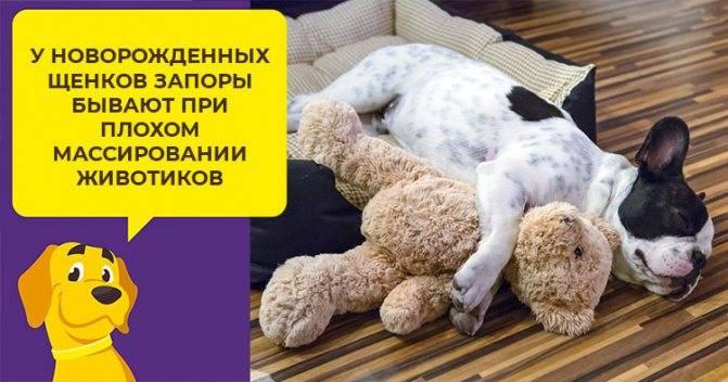 Запор у щенка или собаки - что делать и как помочь дома