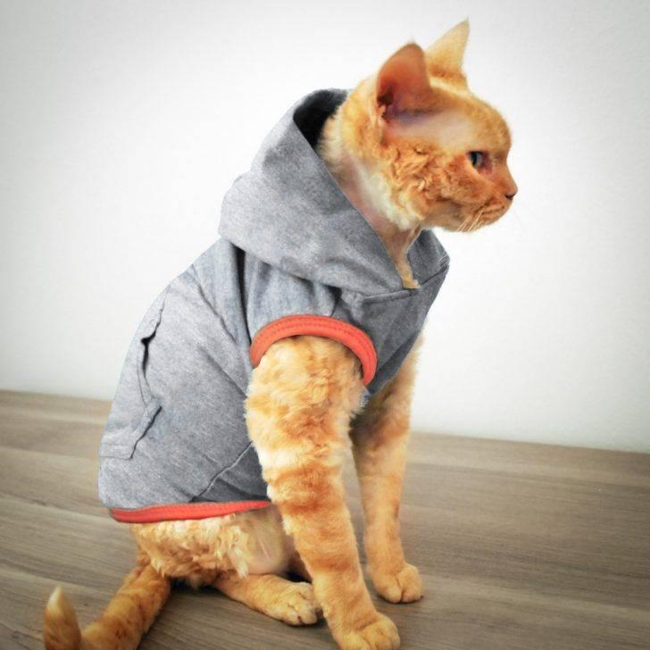 Как сшить одежду для кота своими руками. эксклюзивная одежда для кошек: своими руками можно создать настоящий шедевр