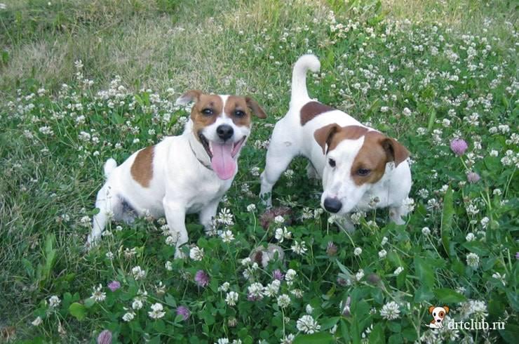 Собака валяется в экскрементах: причины такого поведения.