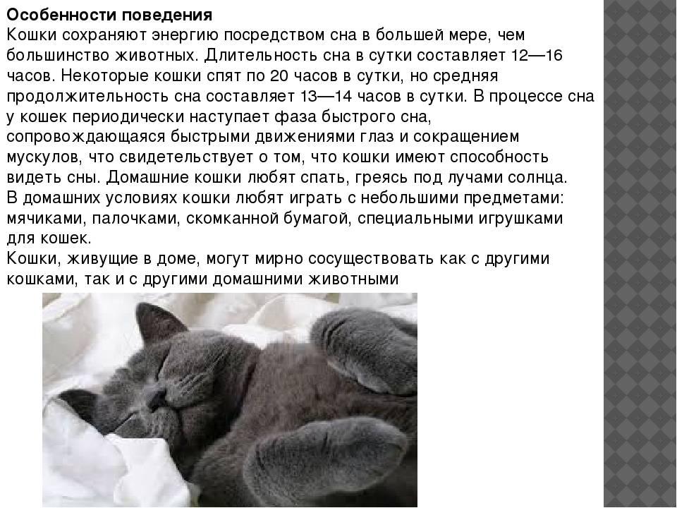 Кошка дрожит, как будто ей холодно: причины тремора