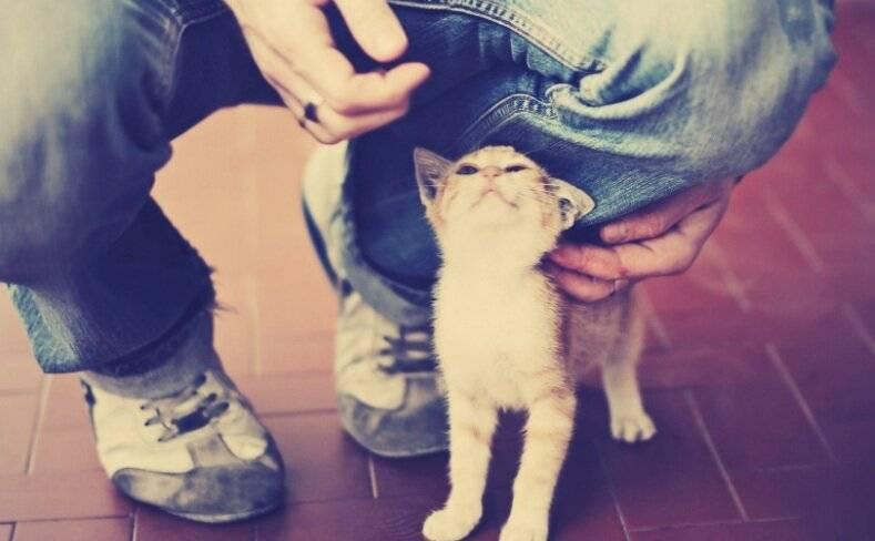 5 действий, которые убедят кошку в вашей любви