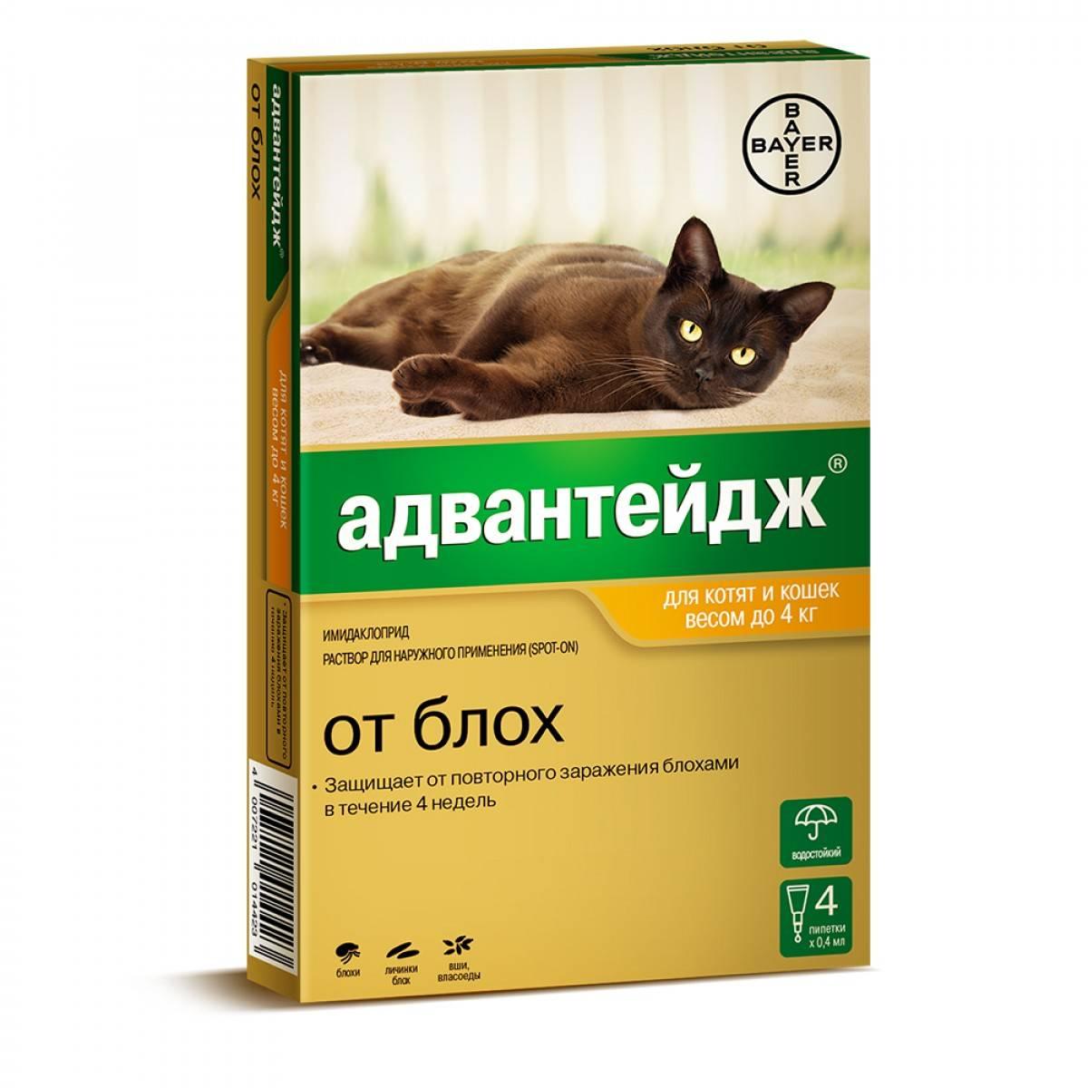 Адвантейдж / advantage (капли) для кошек   отзывы о применении препаратов для животных от ветеринаров и заводчиков