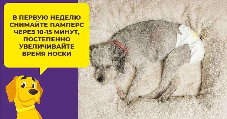 Памперсы для собак: какие лучшие купить | цена, для мелких пород