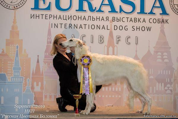 Zooпортал.pro :: international dog show cacib – fci / интернациональная выставка собак cacib – fci г. ярославль «ярославский медведь - 2021»
