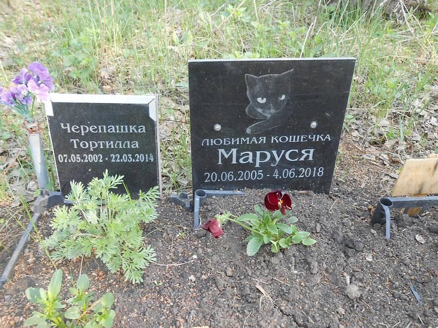 Можно ли похоронить домашнее животное на человеческом кладбище? (видео)