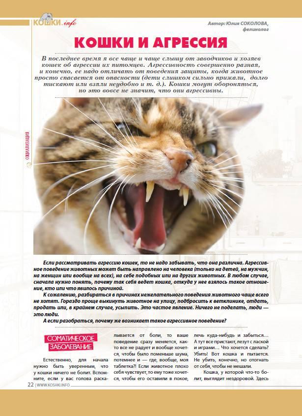 Агрессия у кошек: причины, что делать если питомец стал агрессивный к хозяину, царапается и кусается