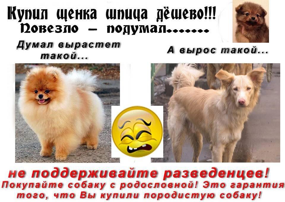 Друг человека: рейтинг самых дорогих собак в мире