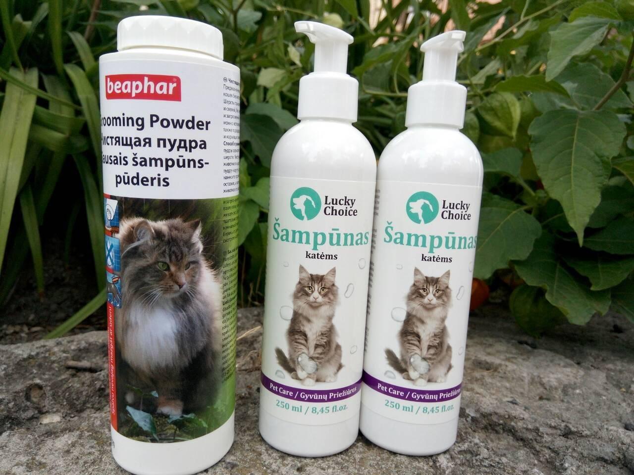 Как выбрать и использовать шампунь для кошек