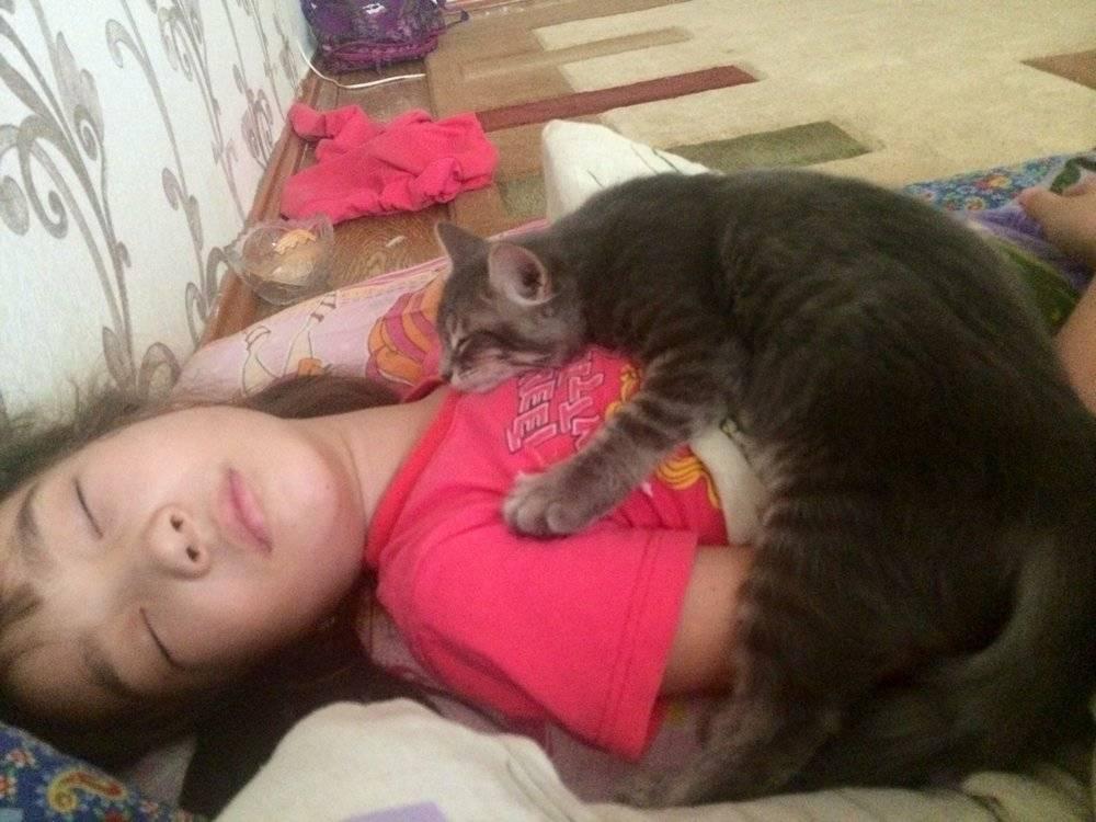 Сколько спят кошки? сколько времени спит взрослый кот за всю жизнь? как долго спят в сутки котята возрастом от 1 до 9 месяцев? сколько времени уходит на сон у домашнего кота зимой?
