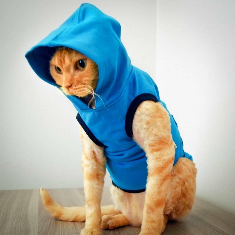 ᐉ как сшить одежду для кота своими руками. эксклюзивная одежда для кошек: своими руками можно создать настоящий шедевр ✅ igrad.su