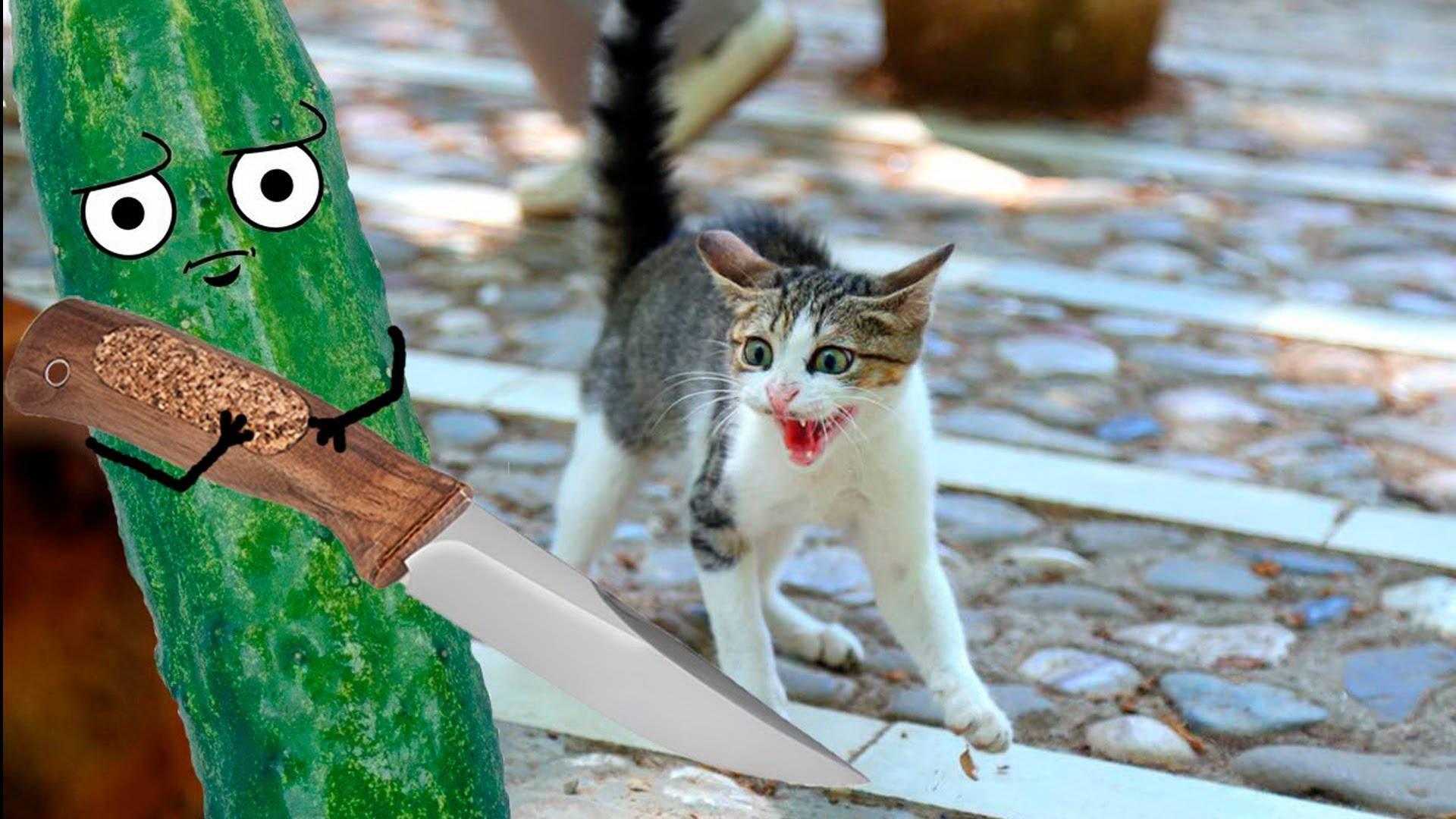 Почему кошки боятся огурцов   почему пугаются