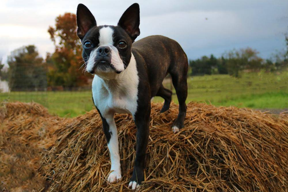 ТОП-5 пород собак, которые теряются чаще всего