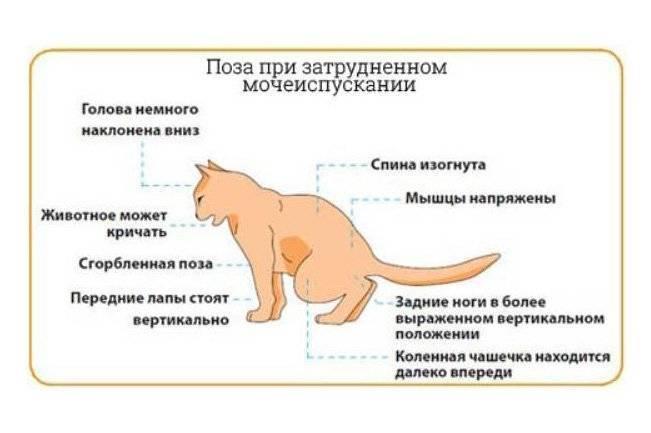 Умеют ли коты и кошки плакать?