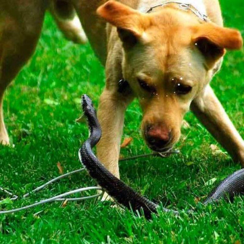 Что делать, если собаку укусила оса: первая помощь