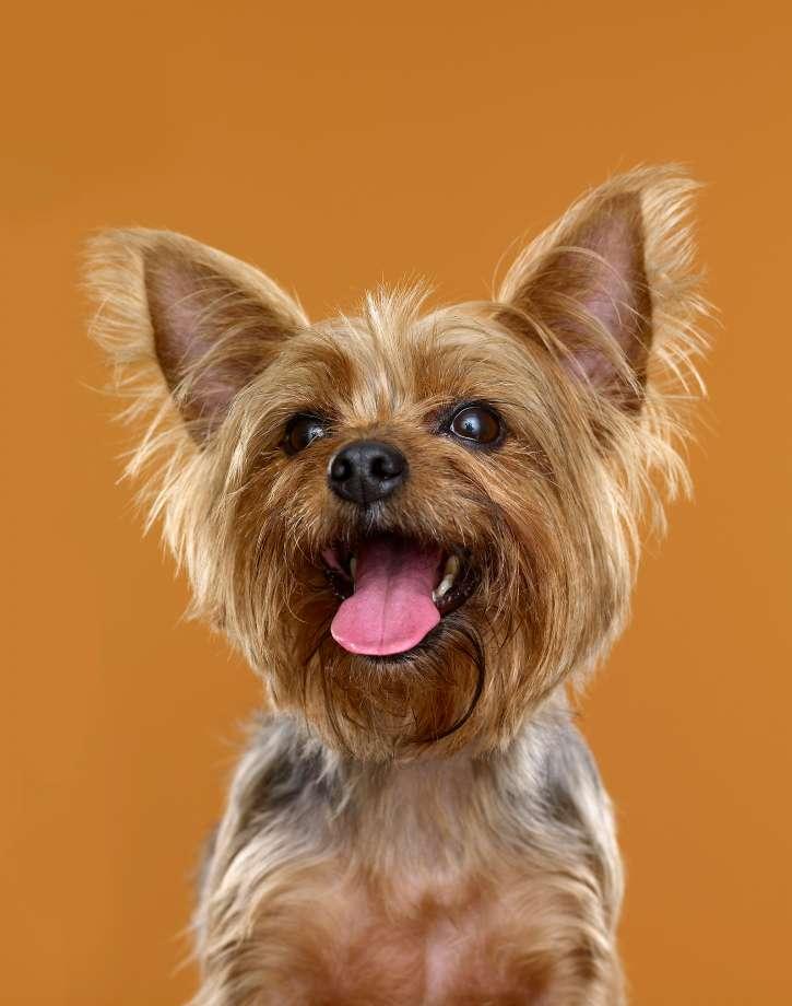 Почему собака дрожит и часто дышит не находит себе место, что делать если собака трясется