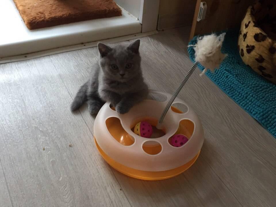 Как развлечь кошку, поиграть с котом дома?