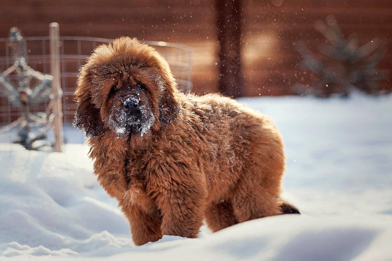Топ-10 самых красивых пород собак