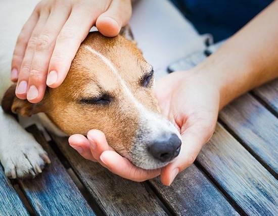 Болезни собак: симптомы и лечение