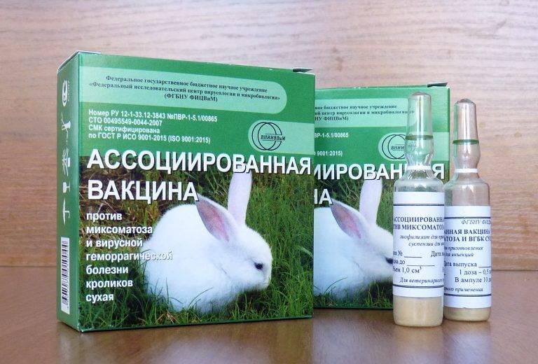 Геморрагическая болезнь кроликов: описание, вакцинация, меры предосторожности – аграрий