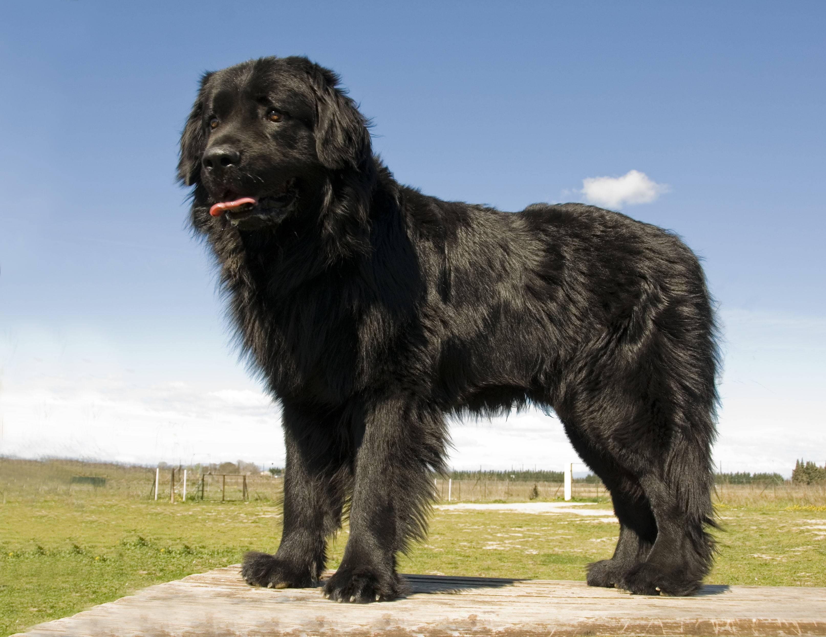 15 самых добрых пород собак для всей семьи :: инфониак