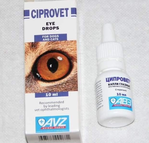 Офтальмологические капли для кошек: обзор и показания к применению